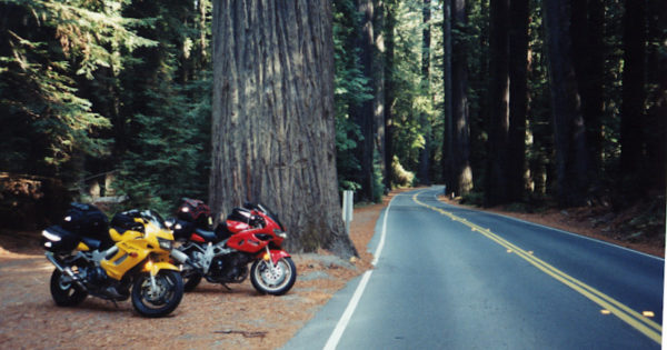 Motorcycles Avenue of the Giants Redwoods