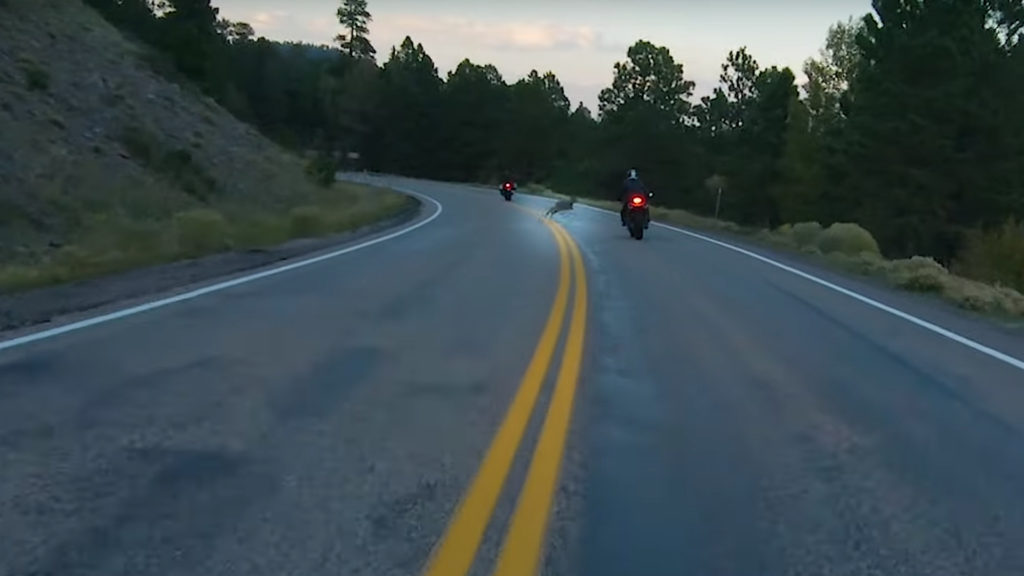 Deer running in front of a motorcycle